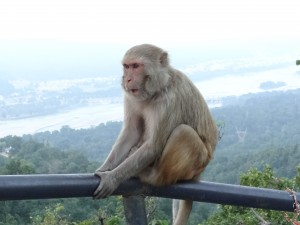 monkey-1